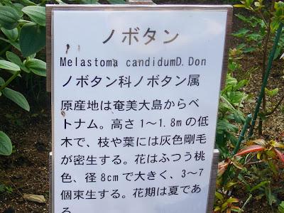 大阪府交野市・大阪市立大学 理学部付属 植物園 ノボタン