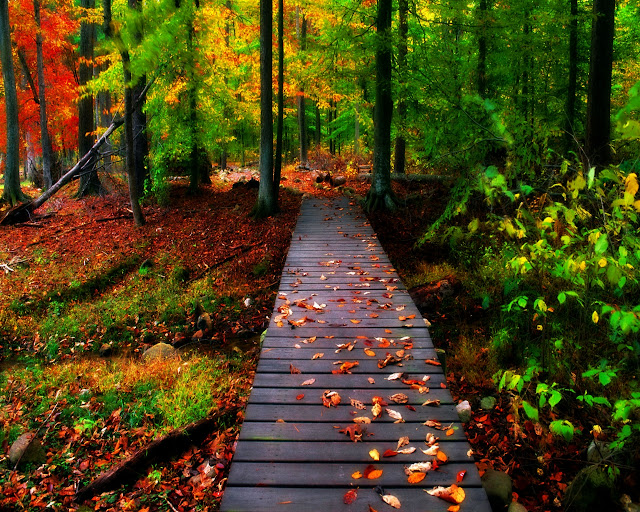 Autumn-pictures-+Wallpaper-Photos-gallery-2011-039