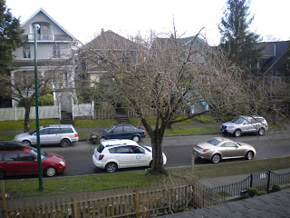 Cherry blossom tree, not yet in bloom, overcast/rainy day