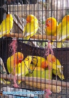 Pasar Burung Splendid Malang