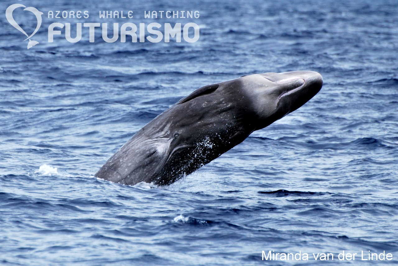 the negative impact of whale watching activities on cetaceans