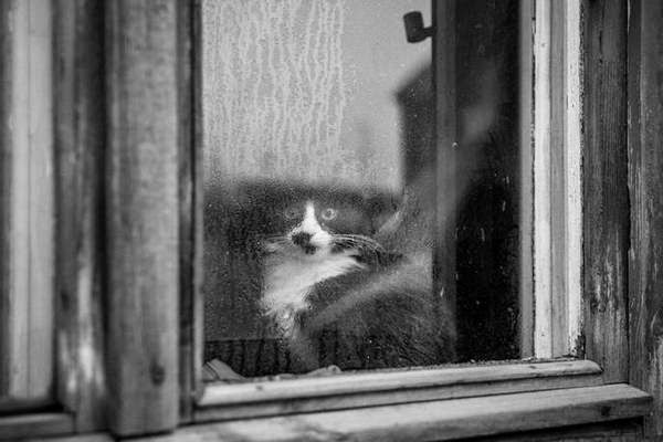 chats paris photos