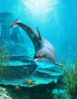 Delfín nadando en las aguas cristalinas