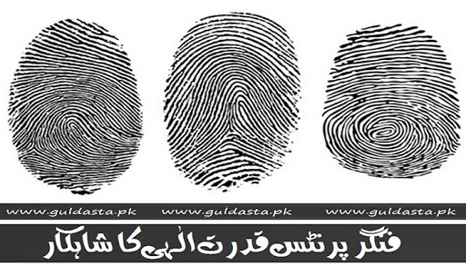 about pakistan,arch fingerprint,digital fingerprinting,fast fingerprint,fbi fingerprint card,fbi fingerprinting,finger print,finger printing,finger prints,fingerprint analysis,fingerprint app,fingerprint card,fingerprint cards,fingerprint clearance,fingerprint clearance card,fingerprint identification,fingerprint patterns,fingerprint reader software,fingerprint scan,fingerprint security,fingerprint technology,fingerprint test,fingerprint types,fingerprinting locations,fingerprinting near me,fingerprinting services,fingerprinting services near me,fingerprints,fingerprints long beach,fingerprints movie,hadees,hadees sharif,how are fingerprints formed,information about islam,latent fingerprints,life with fingerprints,live scan,live scan fingerprinting,live scan form,live scan locations,livescan,livescan fingerprint,loop fingerprint,morphotrust fingerprinting,pakistan general knowledge,pakistan history,pk jobs,types of fingerprints,where to get fingerprinted,whorl fingerprint,ا