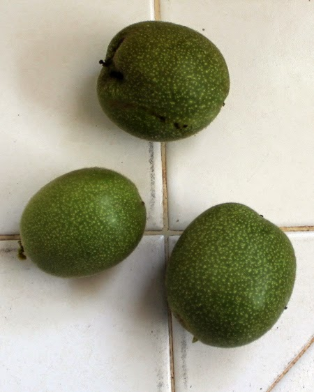 Nocino: Italian black walnut liqueur