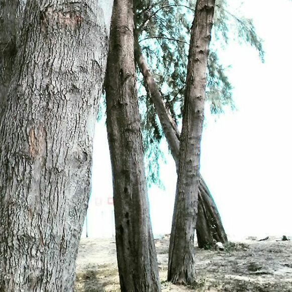 #natureteaches