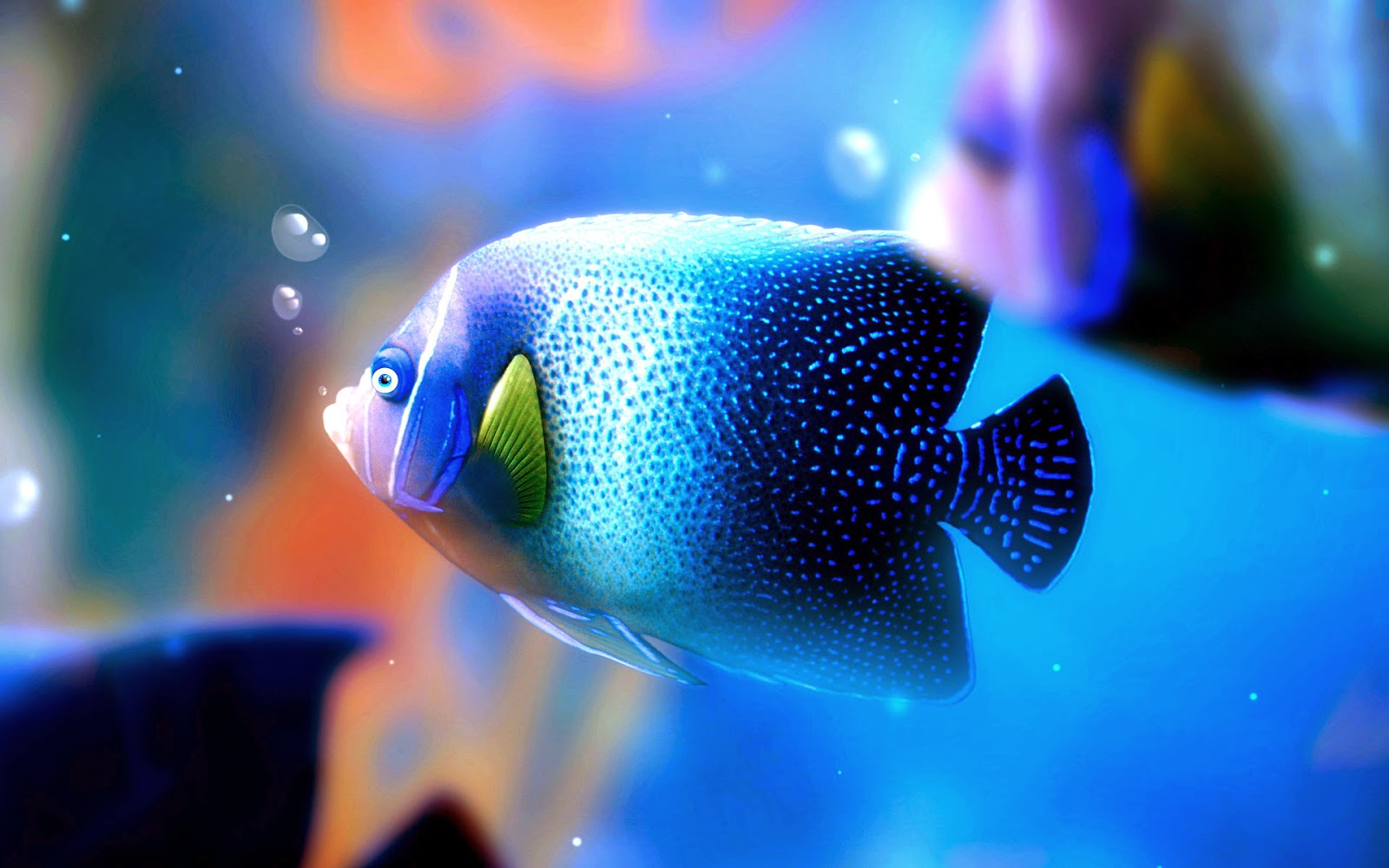 blue fish wallpaper backgrounds - photo #3