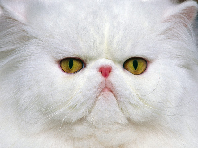 animals beautiful sweet great funny cute cat background