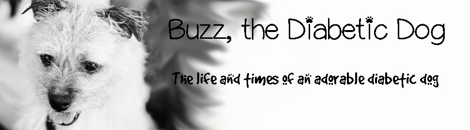 Buzz, the Diabetic Dog