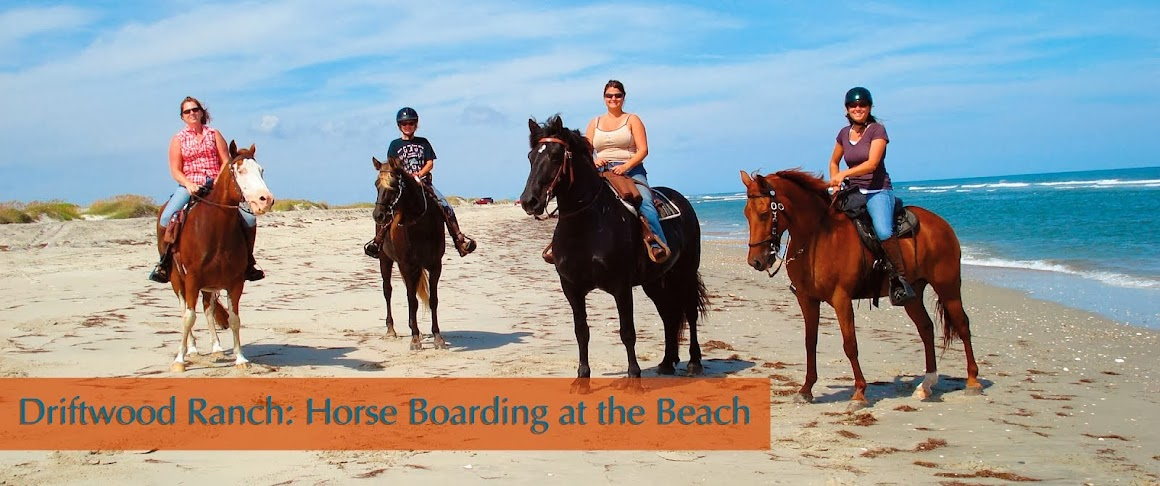 Driftwood Ranch Horse Boarding on Hatteras Island