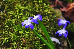 Etwas vom Frühling...