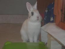 Teo...il mio coniglietto!