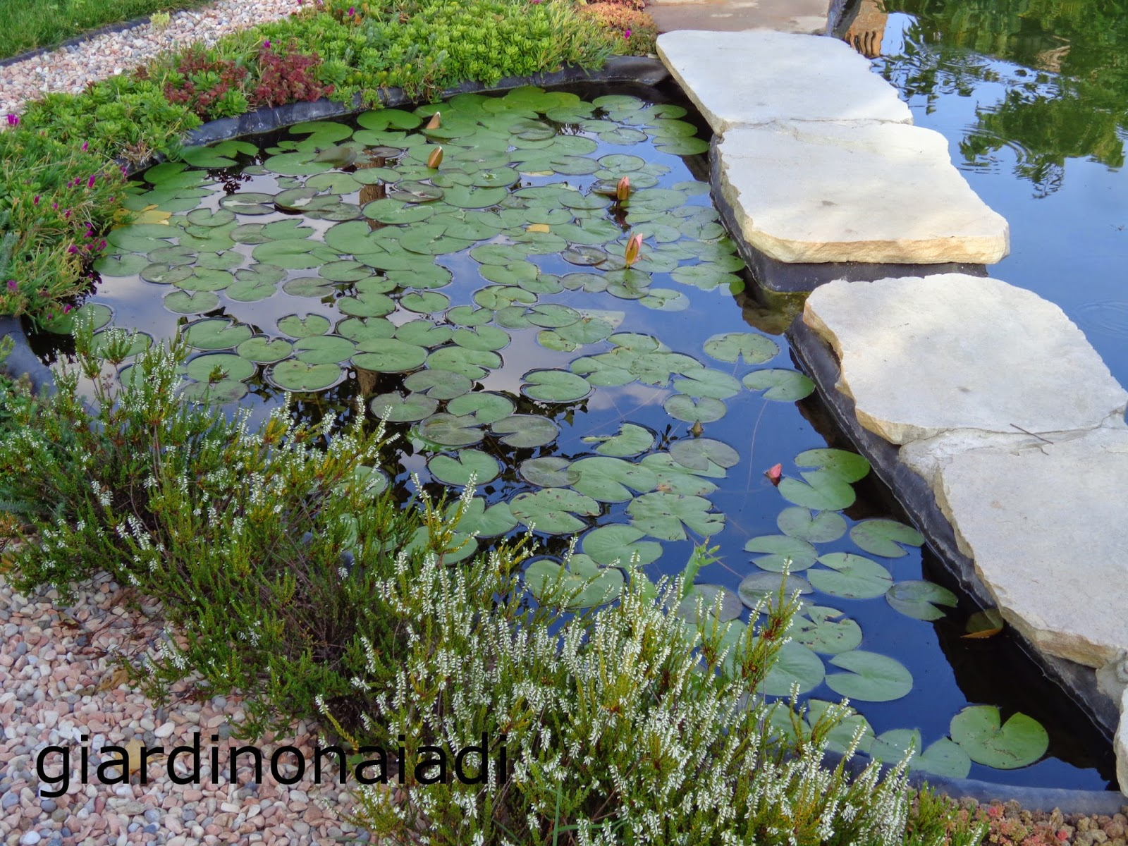 Il giardino delle naiadi filtrazione naturale e tecnica for Costruire laghetto in giardino