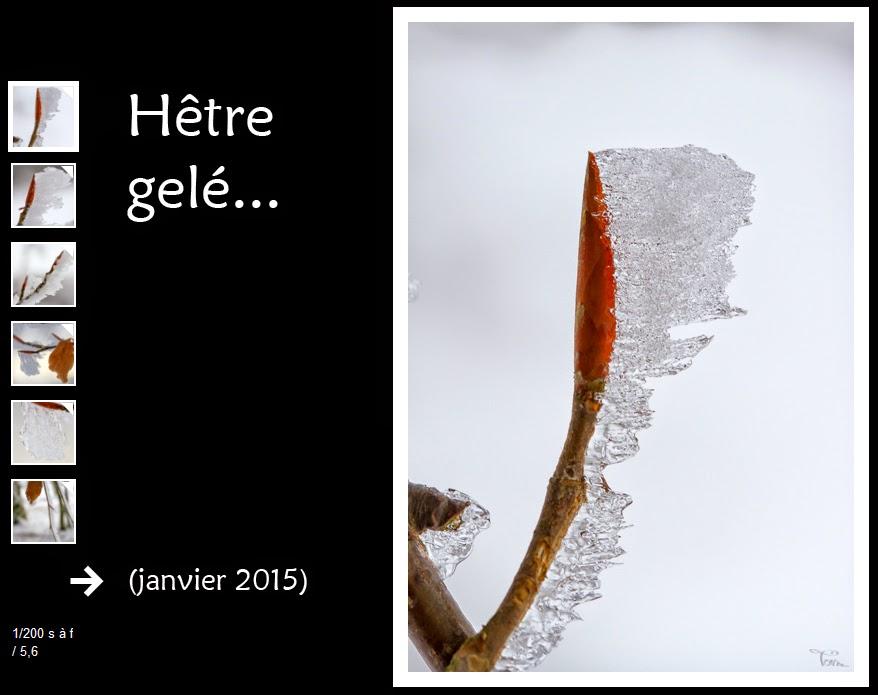 http://instantalautre.free.fr/galeries2015/frenegivre/