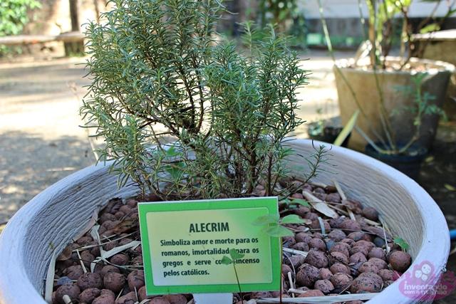 plantas do jardim botanico:Jardim Botânico – Coleção Temática de Plantas Medicinais