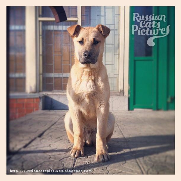 Instadogs Portraits Dog 13
