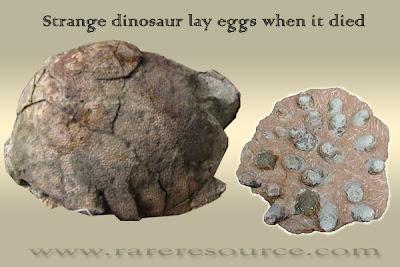 Strange Dinosaur Lay Eggs
