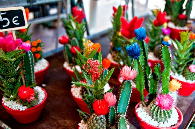 mini jardim de cactus:Irrigação do cactus: Os cactus devem ser regados com uma colher de