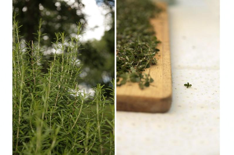 herbes de provence romarin serpolet