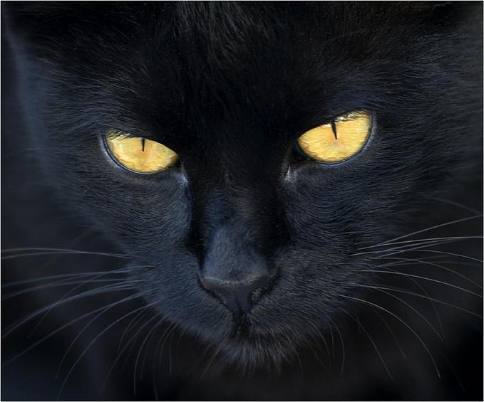 Personaje ¿Que evocaría? (Questionario) - Página 2 El-gato-negro