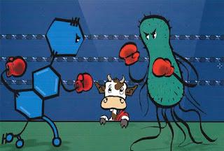 Cuộc chiến giữa vi khuẩn  và kháng sinh chưa tới hồi kết.
