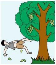 Jatuh dari Pohon Mangga