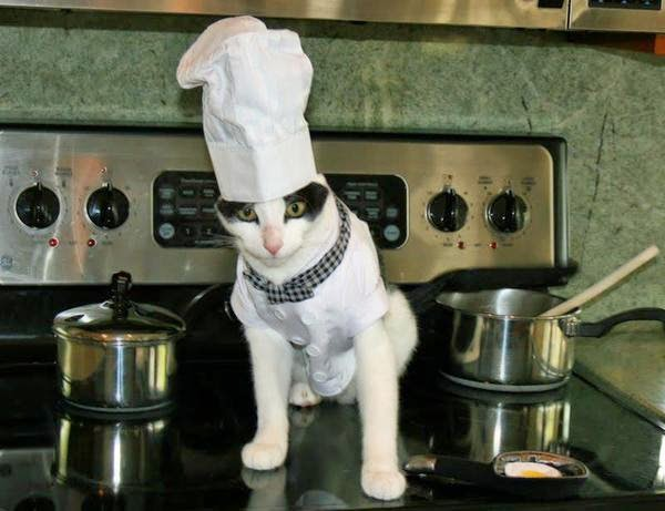 Кот шеф-повар