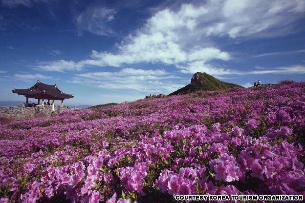 Royal Azalea Festival, Hwangmae Mountain (황매산 철쭉축제)