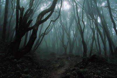 Filler históry - Acontecimentos no inferno - Página 4 Floresta+Negra+sombras+295