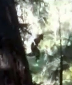 BigFoot Hoax Still From Video - May 2011