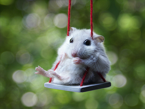adorable childhood cute mouse photography
