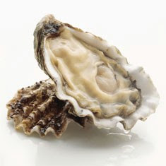 restoring oysters Pacific Oyster