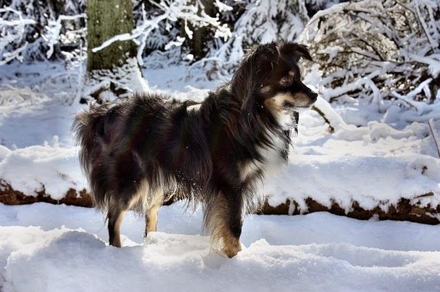 Homeschool Blog, Bernice und Jan Zieba, Hunde-Spaziergang