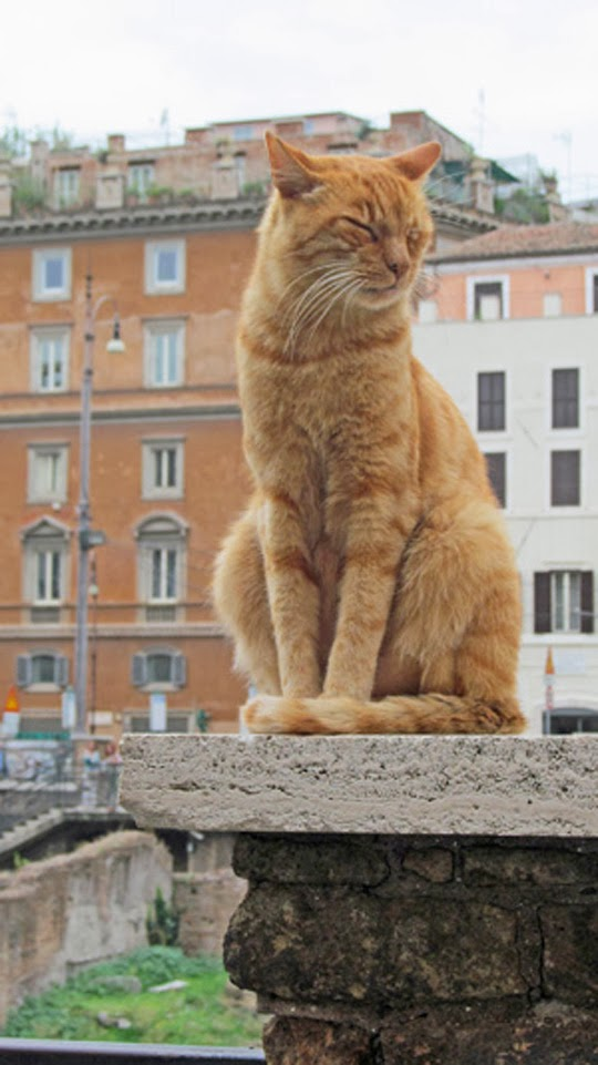 ORANGE CAT ON A COLUMN IN ROME