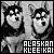 I like Alaskan Klee Kai