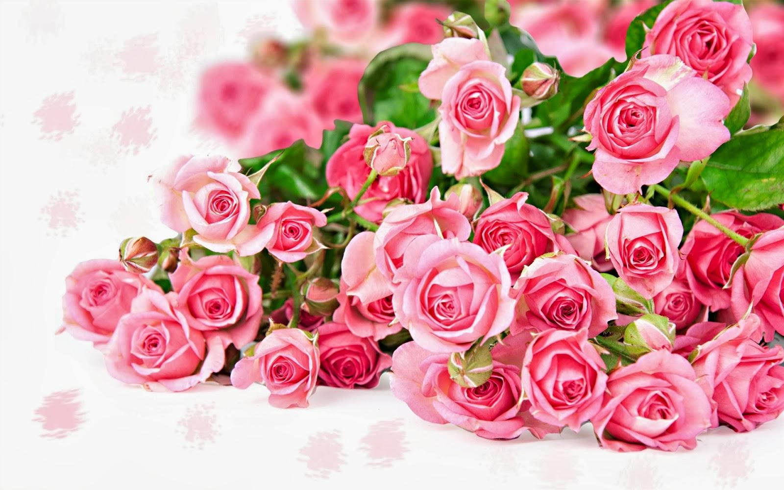 Seikat Bunga Mawar Pink Kumpulan Gambar Gambar Pilihan Gambar Lucu Gambar Bergerak