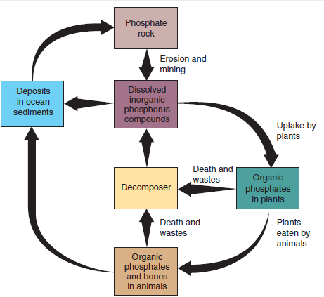 Phosphorus Cycle Plants