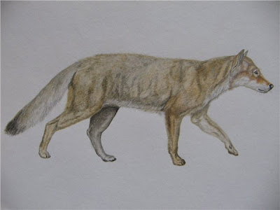 canidae fosil Eucyon