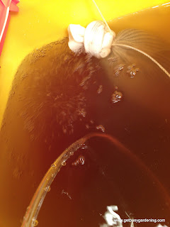 Bubbles in worm tea