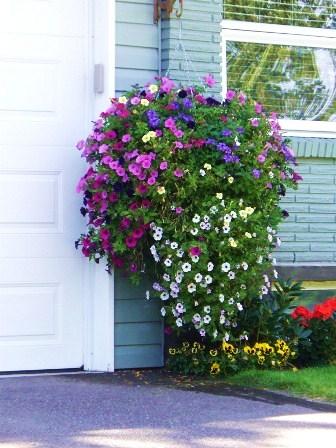 Il giardino sfumato fiori da appendere for Pianta fiorita da esterno