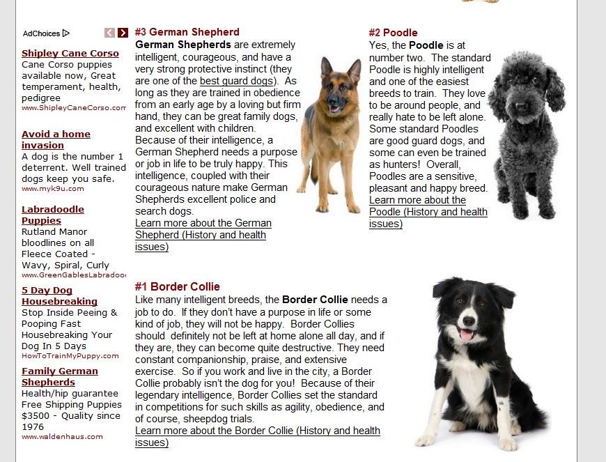 Smartest Dog Breeds Ranked