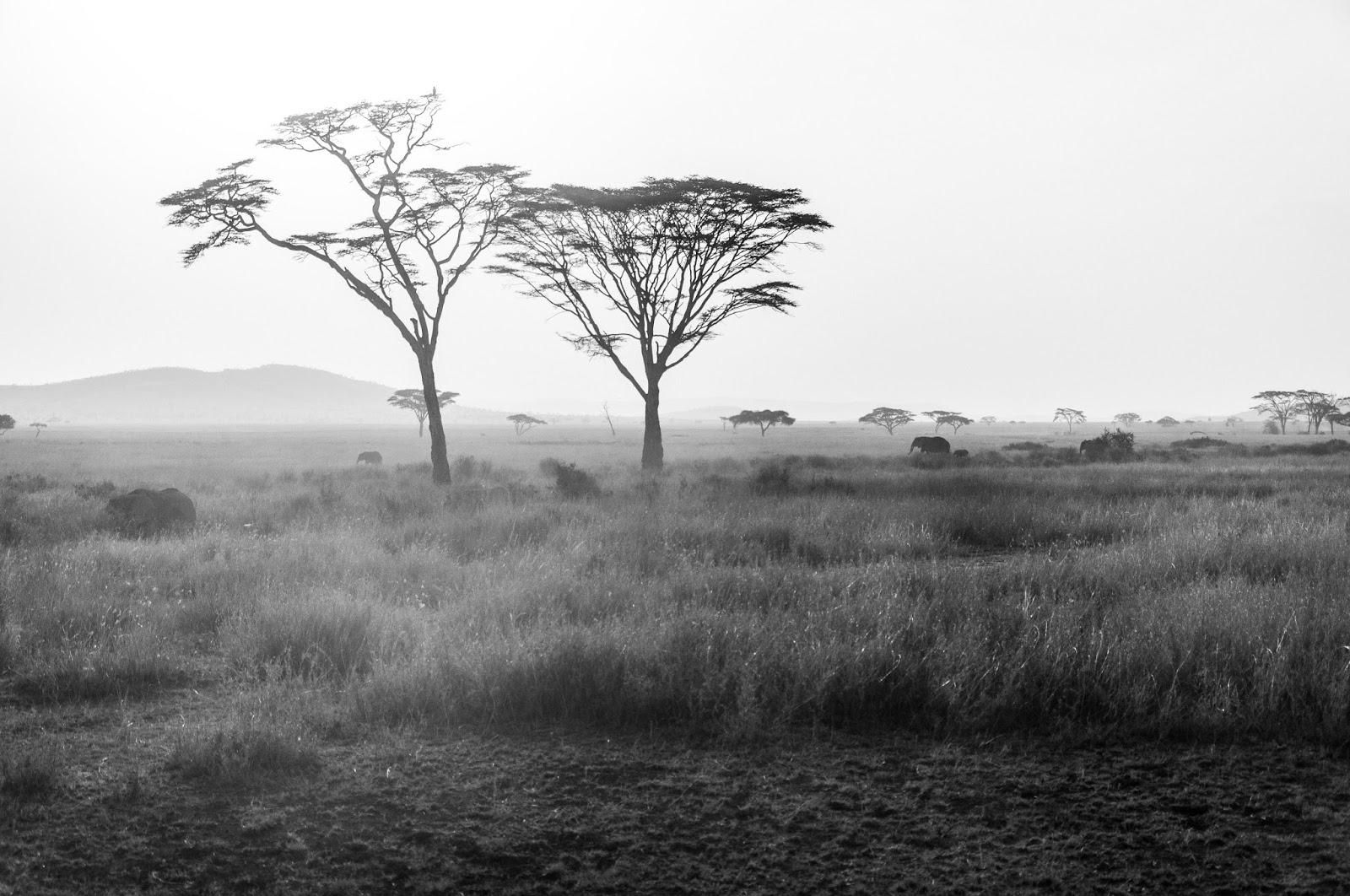 Serengeti Hikayeleri