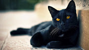 black cat black cat photos