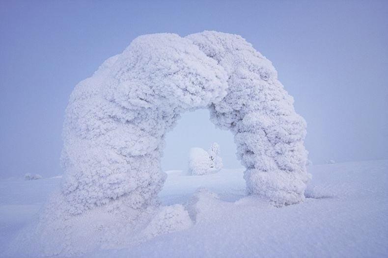Árboles congelados en temperaturas bajo cero