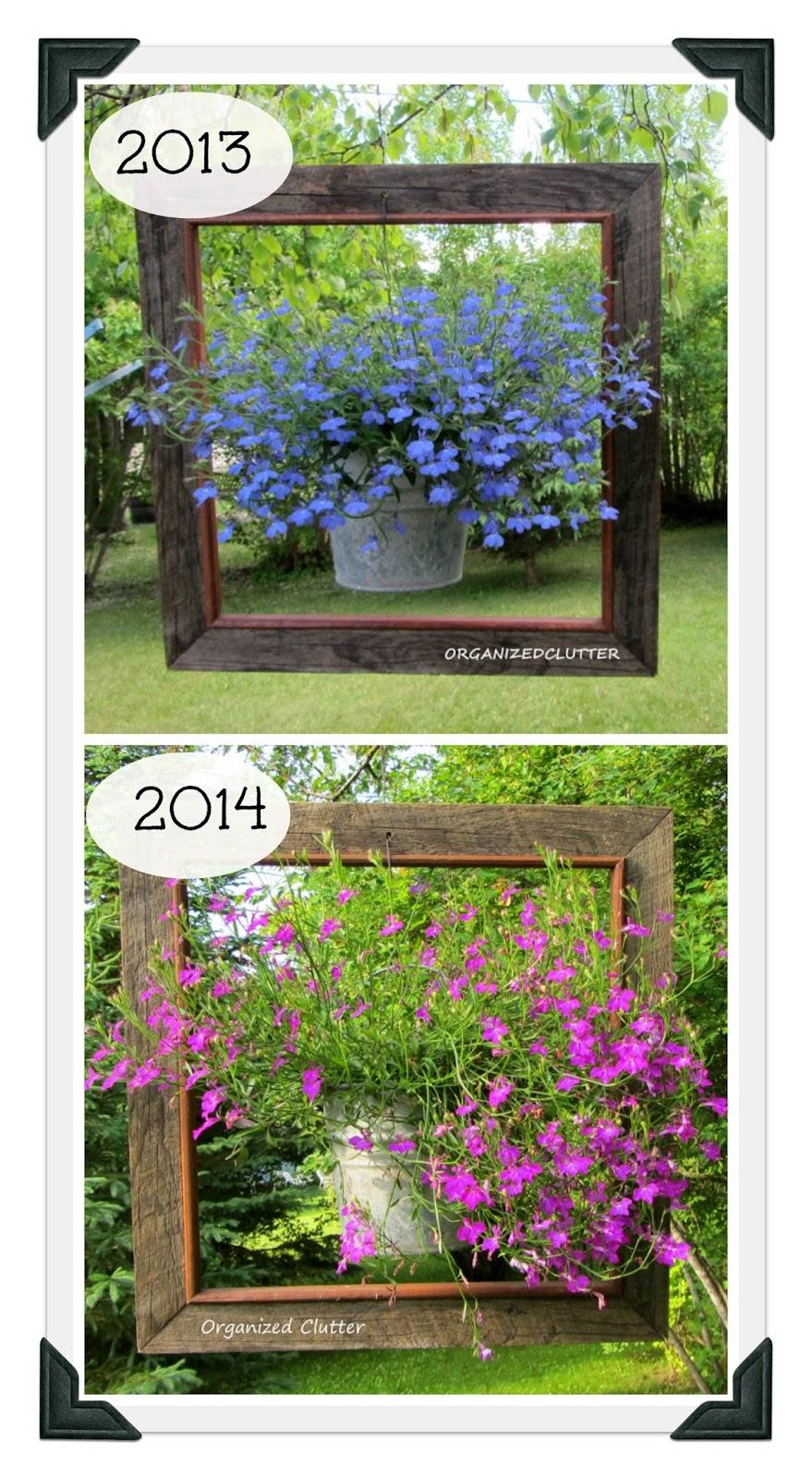 Framed Techno-Heat Lobelia www.organizedclutterqueen.blogspot.com