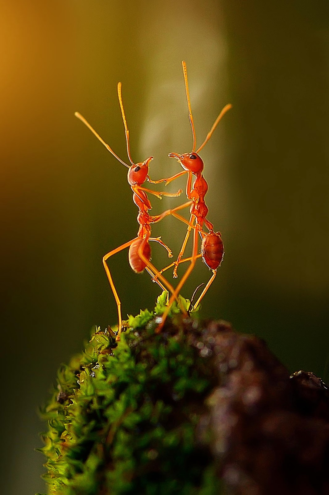 Ants Dancing Photography By Rhonny Dayusasono