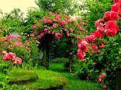 #1 Lovely Flowers Garden Wallpapers