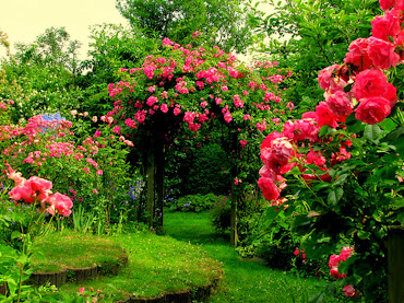 #1 Delightful Flowers Garden Wallpapers