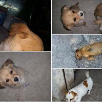 adozione cani cuccioli