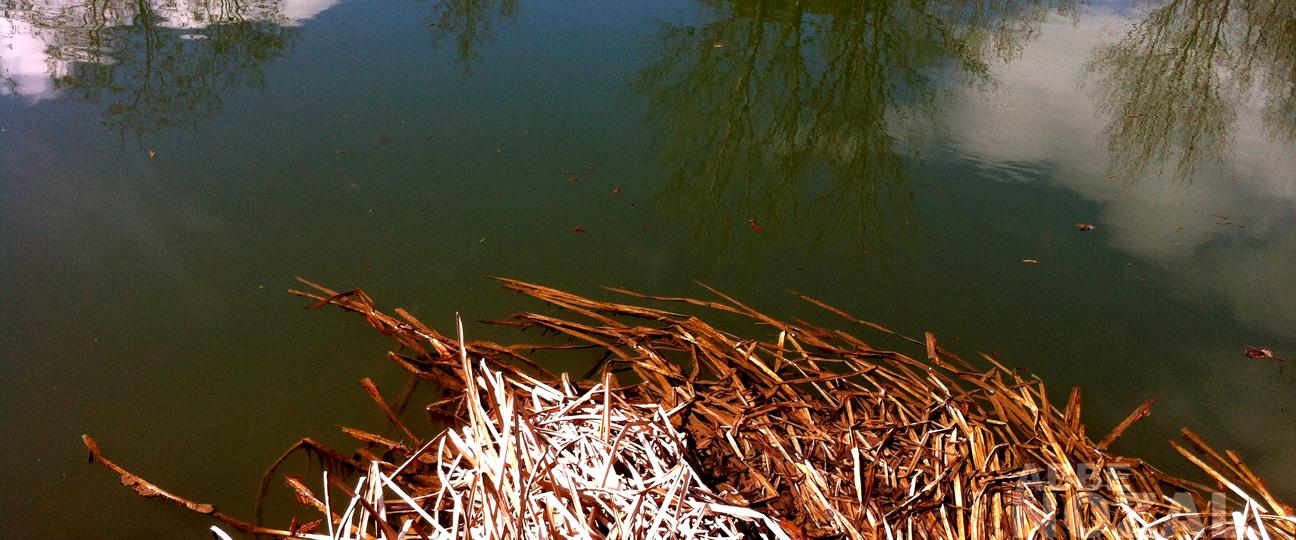 El río peinando la ribera, 2015 Abbé Nozal